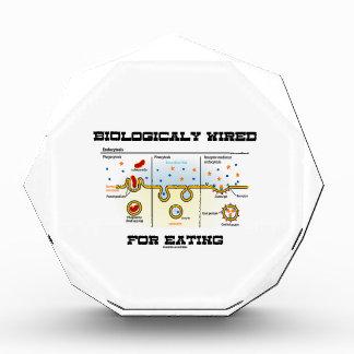 Biológico atado con alambre para comer Endocytosi