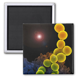 biology microbiology gifts for teachers students 2 inch square magnet