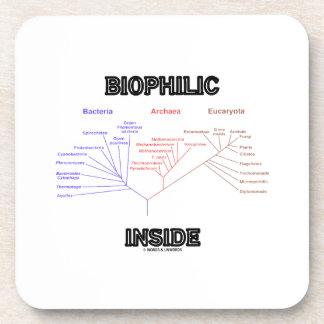 Biophilic Inside Phylogenetic Tree Of Life Beverage Coaster