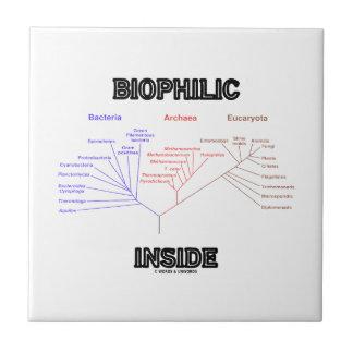 Biophilic Inside Phylogenetic Tree Of Life Ceramic Tile