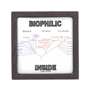 Biophilic Inside Phylogenetic Tree Of Life Jewelry Box