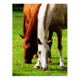 Biracial Horse Couple Postcard