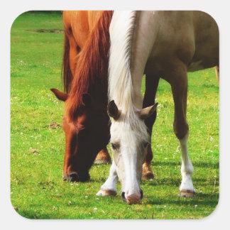 Biracial Horse Couple Square Sticker