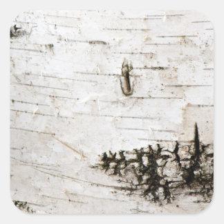 Birch bark 2330 square sticker