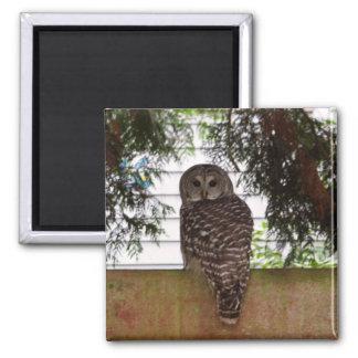 Birch Bay Owl 2 Inch Square Magnet