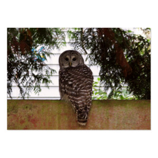 Birch Bay Owl Large Business Cards (Pack Of 100)