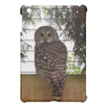 Birch Bay Owl Cover For The iPad Mini