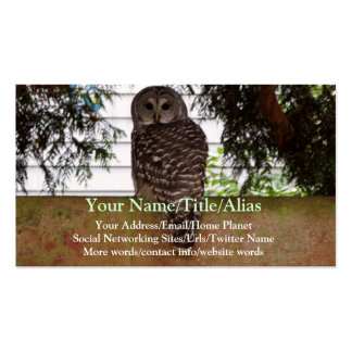 Birch Bay Owl Double-Sided Standard Business Cards (Pack Of 100)