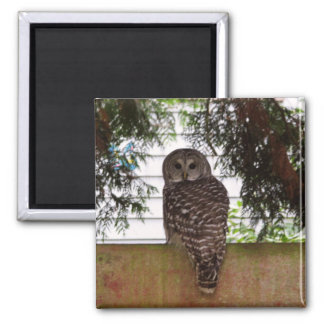 Birch Bay Owl Fridge Magnets