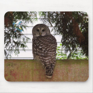Birch Bay Owl Mouse Pad