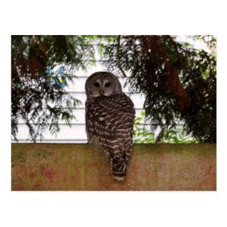 Birch Bay Owl Postcard