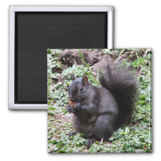 BIRCH BAY SQUIRREL 2 INCH SQUARE MAGNET