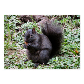 BIRCH BAY SQUIRREL LARGE BUSINESS CARDS (Pack OF 100)