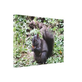 Birch Bay Squirrel Gallery Wrapped Canvas