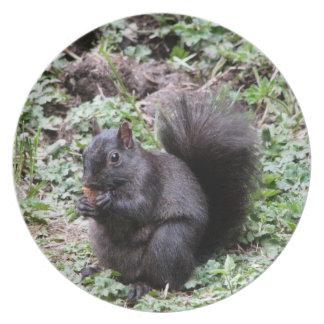 Birch Bay Squirrel Plate
