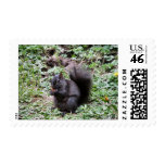 BIRCH BAY SQUIRREL POSTAGE STAMP