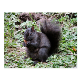 BIRCH BAY SQUIRREL POSTCARD