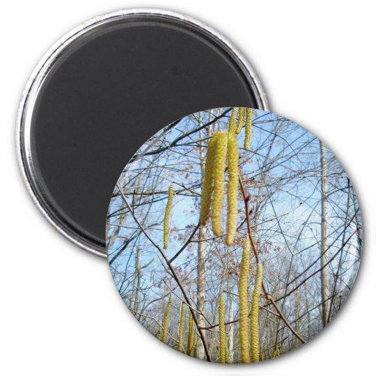 Birch Catkins Magnet