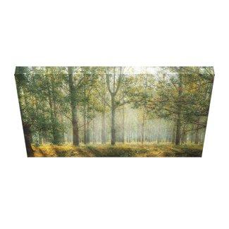 Birch Forest Bathed in Misty Sunshine