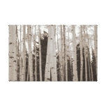 Birch Grove in the Rocky Mountains Wall Art Stretched Canvas Prints