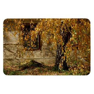 Birch In Autumn Flexible Magnets