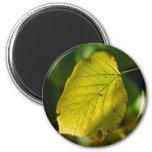 Birch Leaf Magnet