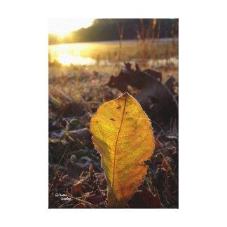 Birch leaf sunrise Stretched Canvas Print
