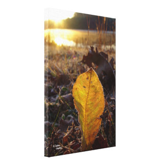 Birch leaf sunrise Stretched Canvas Print
