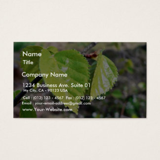 Birch Leaves Green Leaves Business Card