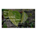 Birch Leaves Green Leaves Business Card Templates