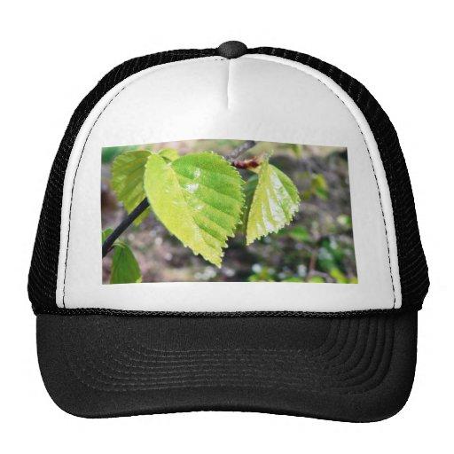 Birch Leaves Green Leaves Mesh Hat