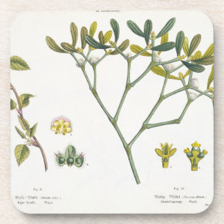Birch (left) and Mistletoe (right), fig. 9 and 10 Coaster