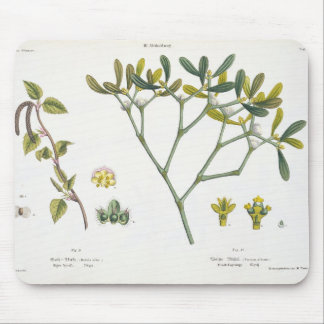 Birch (left) and Mistletoe (right), fig. 9 and 10 Mouse Pad