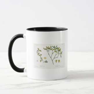 Birch (left) and Mistletoe (right), fig. 9 and 10 Mug