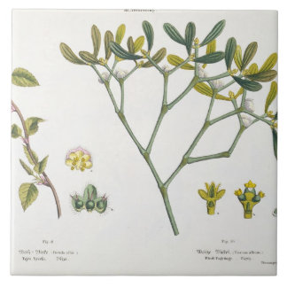 Birch (left) and Mistletoe (right), fig. 9 and 10 Tile