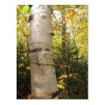 birch post card