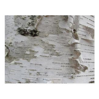 Birch Tree Bark Peeled Old Photo Art Postcard
