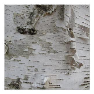 Birch Tree Bark Peeled Old Photo Art Poster