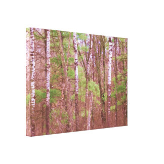 Birch Tree Canvas Stretched Canvas Prints
