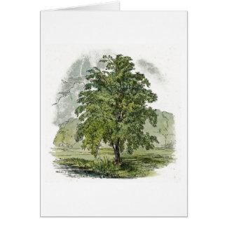 Birch Tree Cards