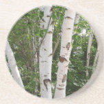"Birch Tree Coaster<br><div class=""desc"">Beautiful birch trees adorn this drink coaster.</div>"