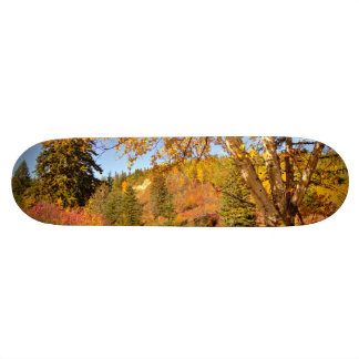 Birch Tree in Autumn Skateboard