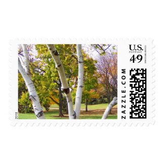 Birch Tree in the Park Stamp