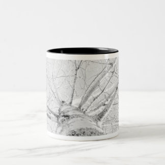 Birch Tree in Wintertime Two-Tone Coffee Mug