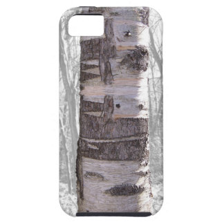 Birch Tree iPhone 5 Covers