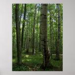 aaron, widell, birch, trees, sue