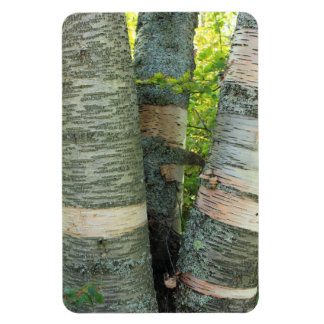 Birch Tree Rectangle Magnet