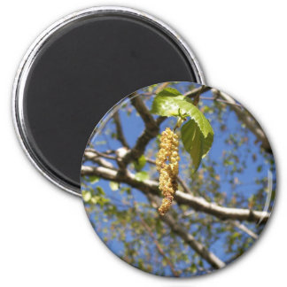 Birch Tree Seed Pods Magnet