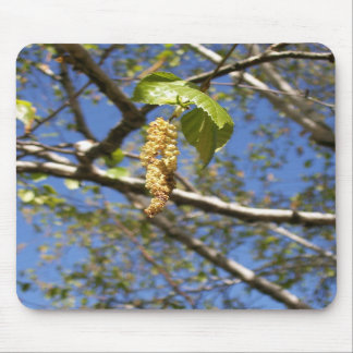 Birch Tree Seed Pods Mousepad