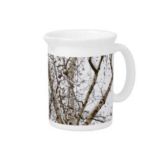birch tree with snow drink pitcher